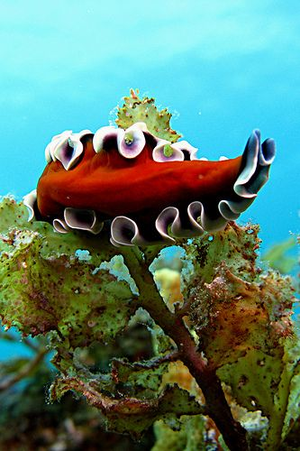 #Flatworm    http://www.roanokemyhomesweethome.com