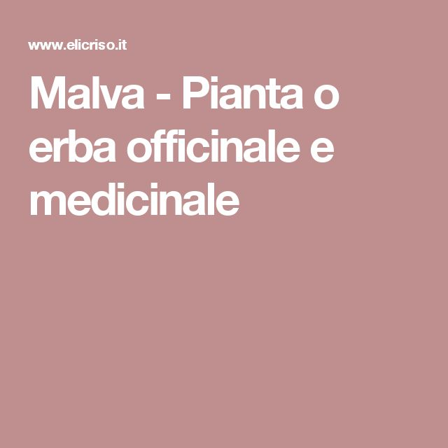 Malva - Pianta o erba officinale e medicinale