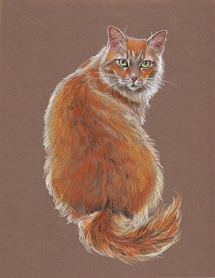 Картинки кошки рисунки животные