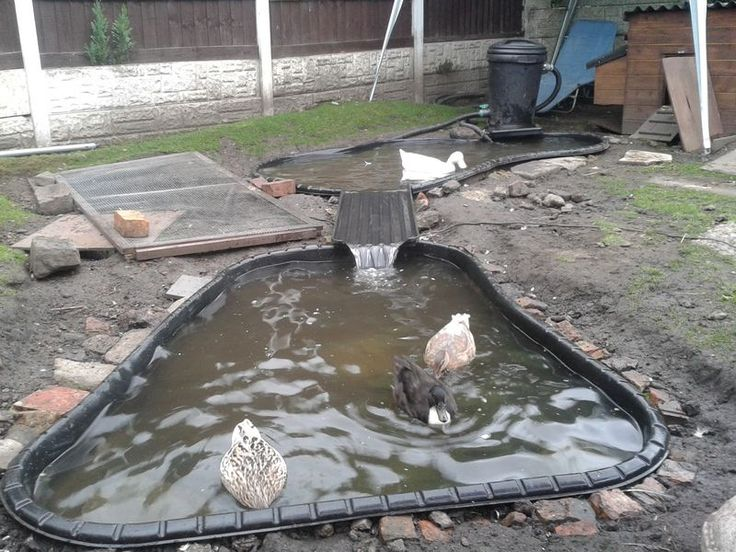 What to use for a duck pond and how to keep it clean for Preformed pond