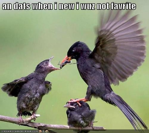 .: Sibling Rivalry, Funny Birds, Little Birds, Demotivational Posters, Funny Stuff, Motivation Posters, So Funny, True Stories, Animal