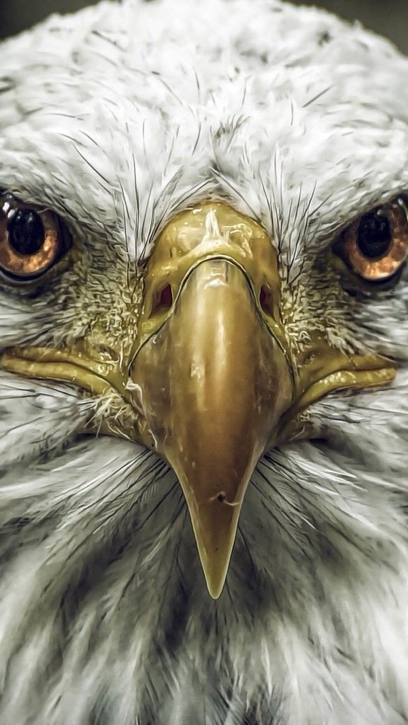 Pin By Haru S Mom On Besiktas Eagle Wallpaper Eagle Pictures