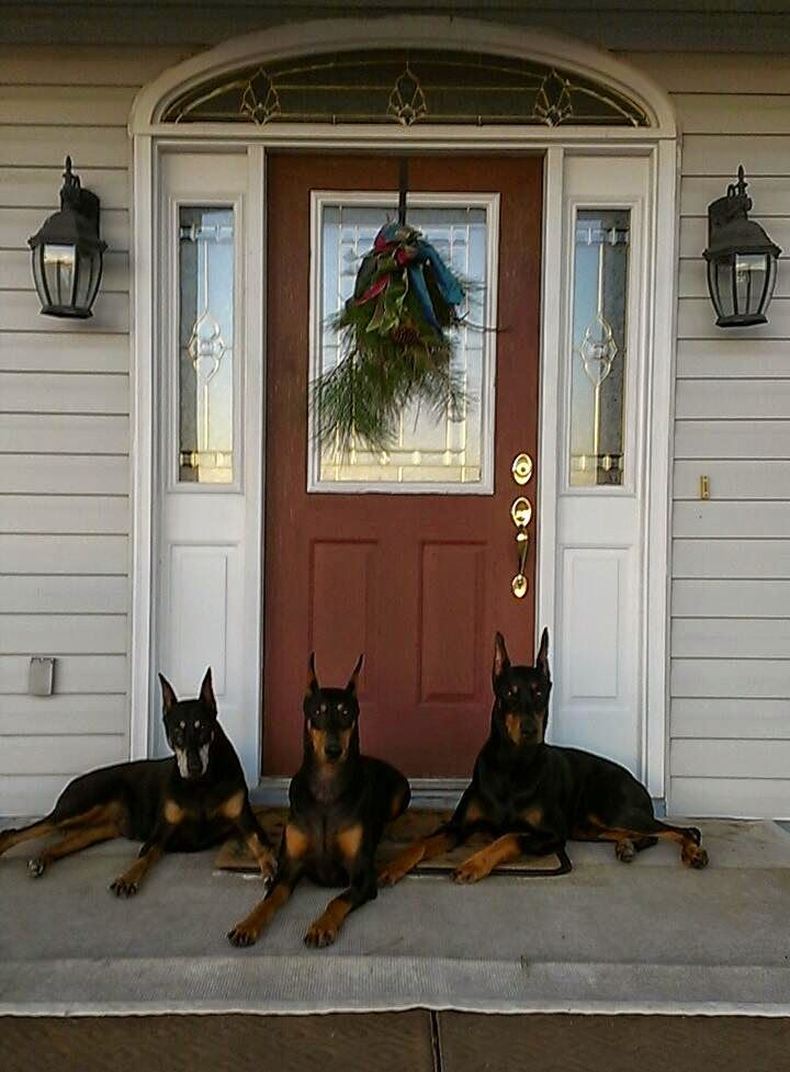 I wish the front of my house looked like this! #Doberman love. #DobermanPinscher
