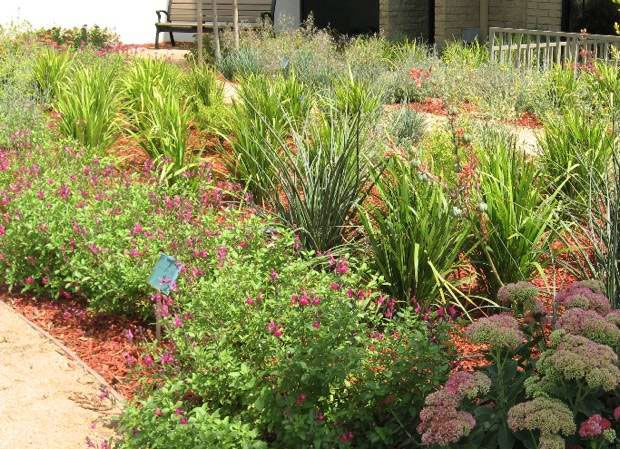 The city of glenora california showcases drought resistant gardens with plants donated by - Heat tolerant plants keeping gardens alive ...