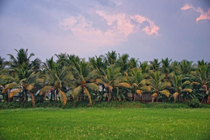 https://flic.kr/p/nT5YVr | Alleppey Backwater, Kerala, India