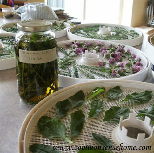 How To Make Your Own Homegrown Medicinal Herbs | http://homestead-and-survival.com/how-to-make-your-own-homegrown-medicinal-herbs/