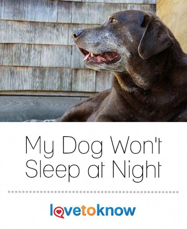How to get your puppy to sleep alone at night