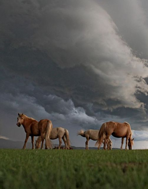 Grazing Horses in Mongolia-seriosly why wouldn't you go here