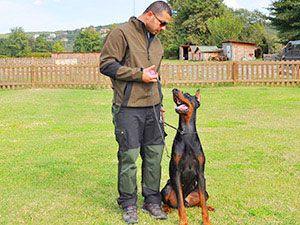 köpek eğitimi - temel itaat eğitimi http://www.kopek-egitimi.com/Kopek-Egitimi/Kopek-Egitimi.aspx