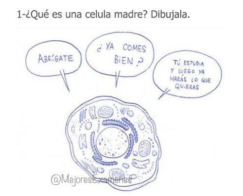 """""""@MejoresExamenes: ¿QUÉ ES UNA CELULA MADRE? pic.twitter.com/vum7x8cfZM"""" @andrea_saugar @IsabelMR98 ya sabéis para el examen"""