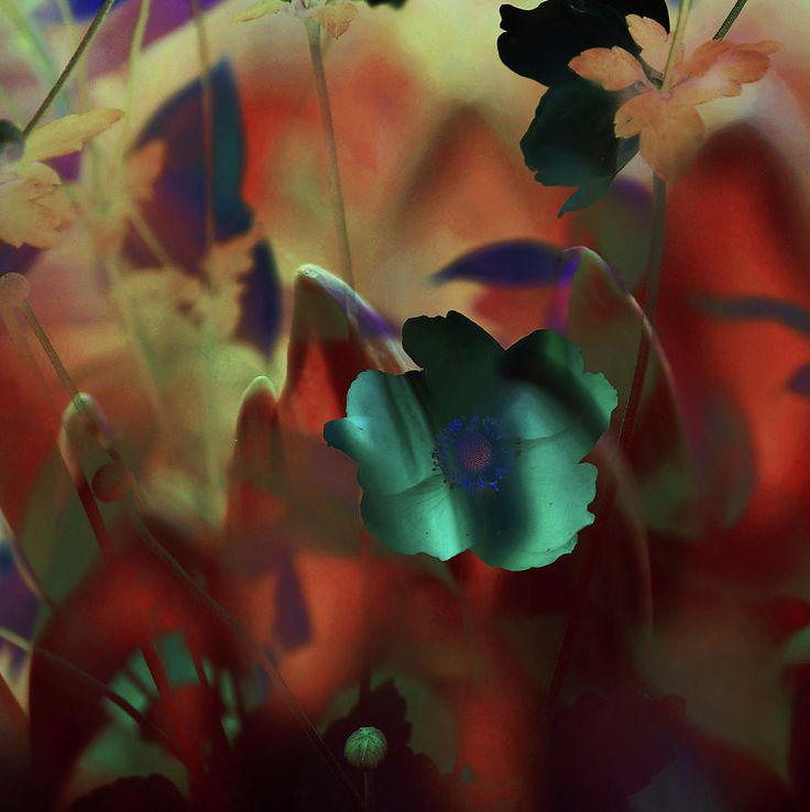 Moonlight Waltz Of Flowers by Jenny Rainbow