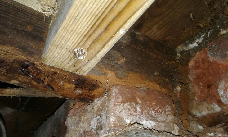 Fixing a new floor joist into a completely rotten timber...cowboy!