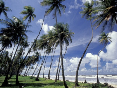 Manzanilla Beach, Trinidad  Been. But would be happy to go again. :o)