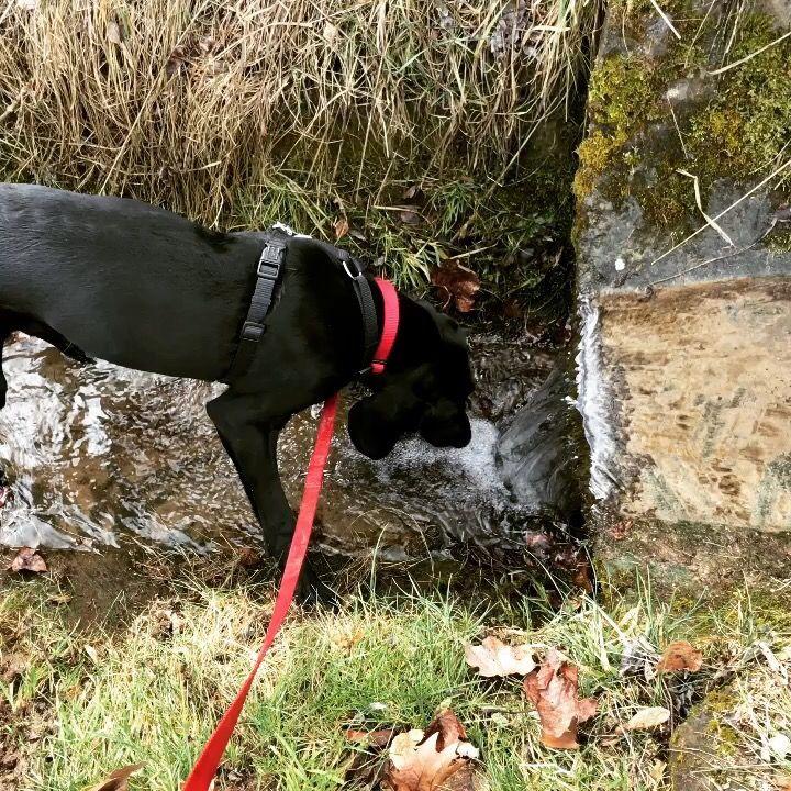 Dogschool 🐕💨 #dog #dogs #dogwalking #dogsofinsta #dogsoninstagram #petstagam #hundeleben #kurzhaar #schweißhund #schweisshund #pfoten #pfotenabdrücke #4pfoten #school #dogschool #water #wasser #bach #fluss #wasserfall #waterfall #wiese #gras #moos #fun