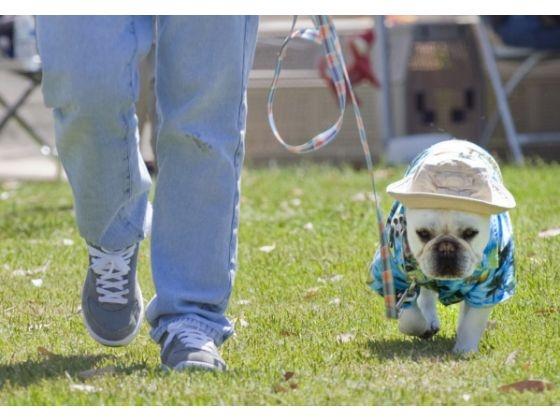 Wagathon: Animal Shelters, French Bulldogs