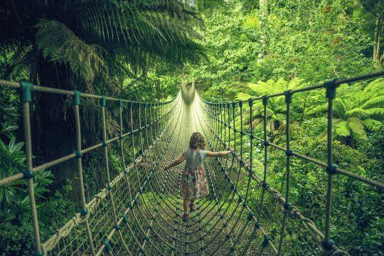 Le pont vers les jardins perdus  Les jardins perdus de Heligan, Cornouailles, Angleterre