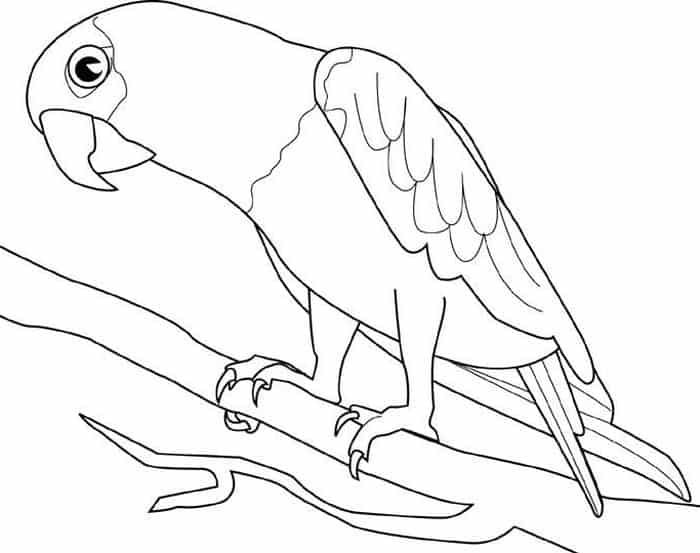 Parrot Printing Coloring Pages Bird Coloring Pages Animal Coloring Pages Coloring Pages