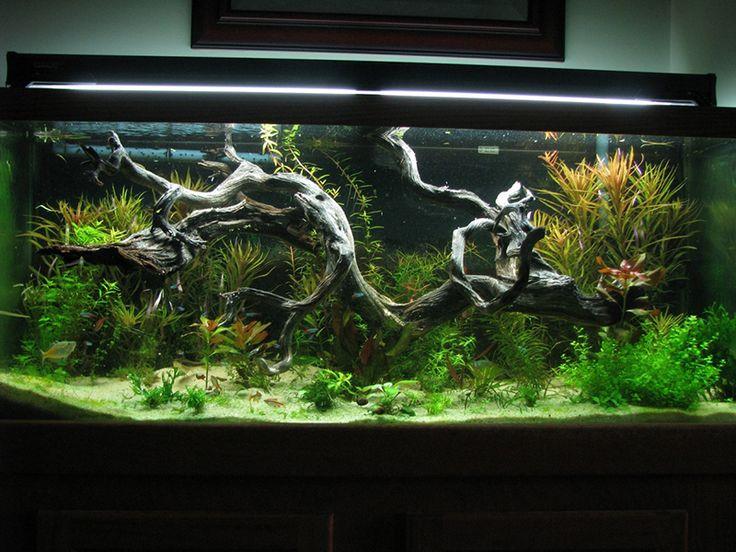 556 best Aquascape images on Pinterest Aquarium ideas Aquarium