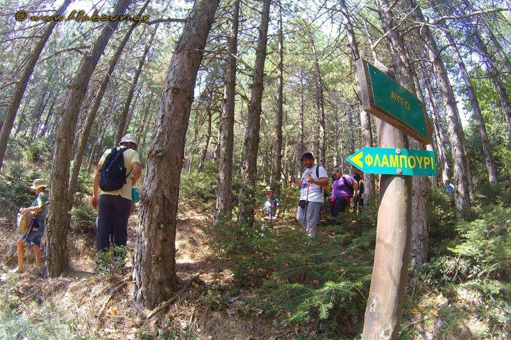 Πεζοπορική βόλτα για μικρούς και μεγάλους στο δρυμό της Πάρνηθας - Φλαμπούρι 10/09/2017 #πεζοπορία #Πάρνηθα #καταφύγιο #Φλαμπούρι #hike #flabouri #bolta