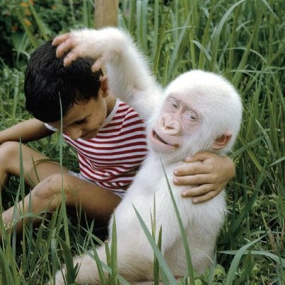 For nearly 40 years the only known albino gorilla named Snowflake was adored by people around the world.It is sad that his life ended up at the Barcelona Zoo 4 years ago.In 1967, local villagers in Africa's Equitorial Guinea captured a rema…