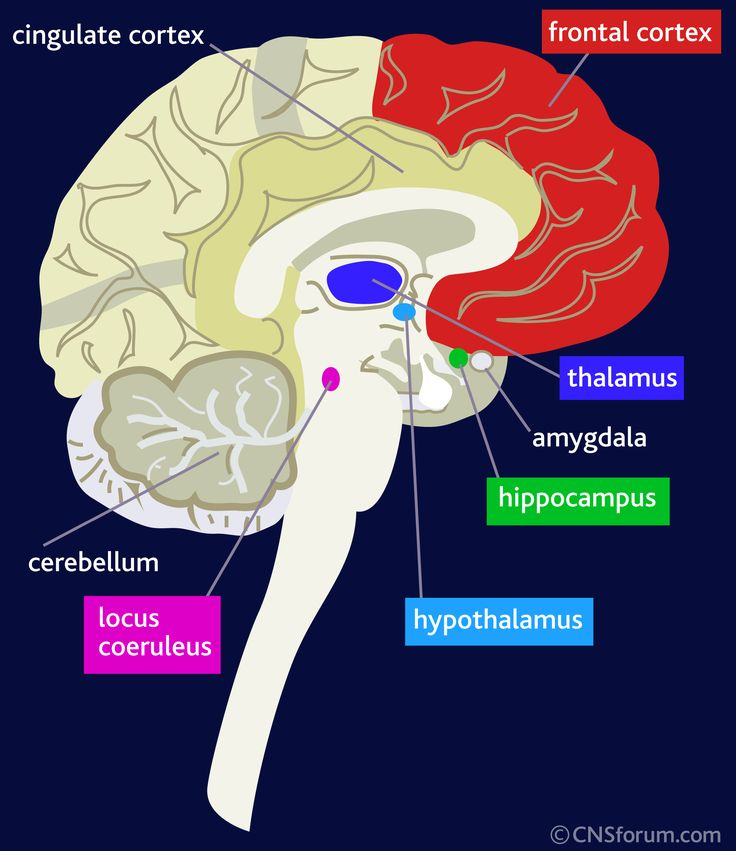 Brain - useful visual for explanations for emotional states such Anxiety Panic Attacks