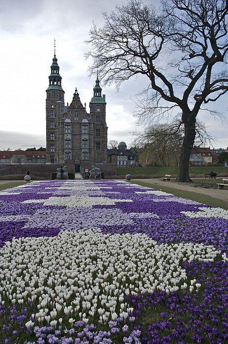Copenaghen,,,,,,crocus
