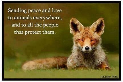 ♥ animal rights / diritti degli animali ♥