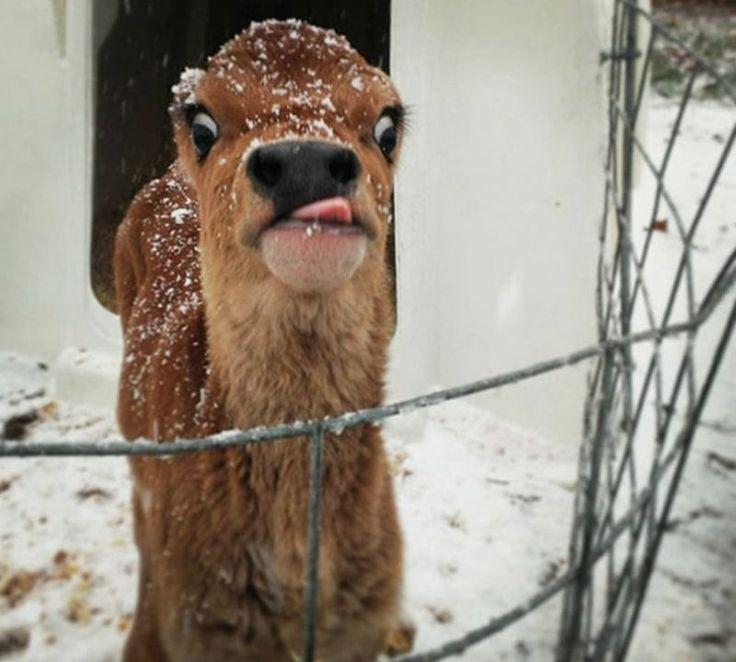 Unflattering Animal Photos – 24 Pics