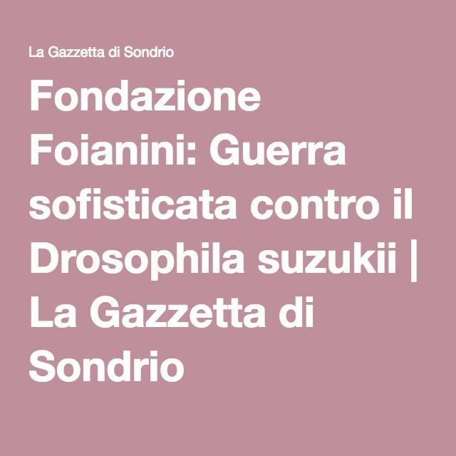 Fondazione Foianini: Guerra sofisticata contro il Drosophila suzukii   La Gazzetta di Sondrio