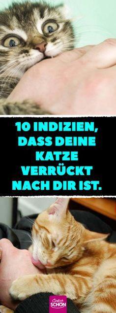 10 Indizien, dass deine Katze verrückt nach dir ist. #katze #katzen #freundschaft #sprache #liebt