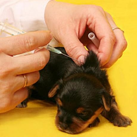Dog Breeding, Whelping and Puppy Care s torrent