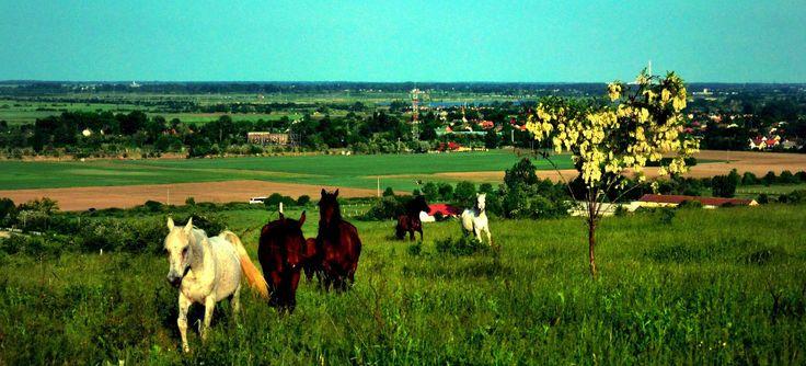 Der Huzule,Ungarns ält.Pferderasse Reiten in den Nationalpark Bükk Gebierge  Die Ferien,Natur&Kulturregion Miskolc-Malyi im Nationalpark Bükk (der größte Ungarns und Unesco-Welterbe)bieten im engen Umkreis von wenigen Kilometern eine Vielzahl nationaler & internationaler Highlights.  So findet jeder Tourist sein Steckenpferd für ein unvergessliches Urlaubserlebniss.......  Mit ihrer ADAC,ÖAMTC oder anderer Autoclubkarte sparen sie bei unseren Partnern 10% zum sowieso günstigen Preis....