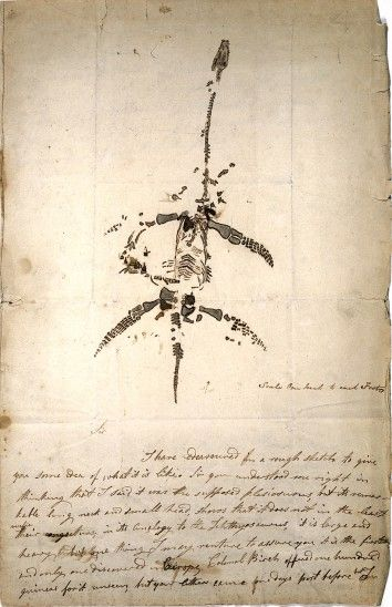 Mary Anning - Drawing of partially complete skeleton of creature with long thin neck, small skull, and paddles