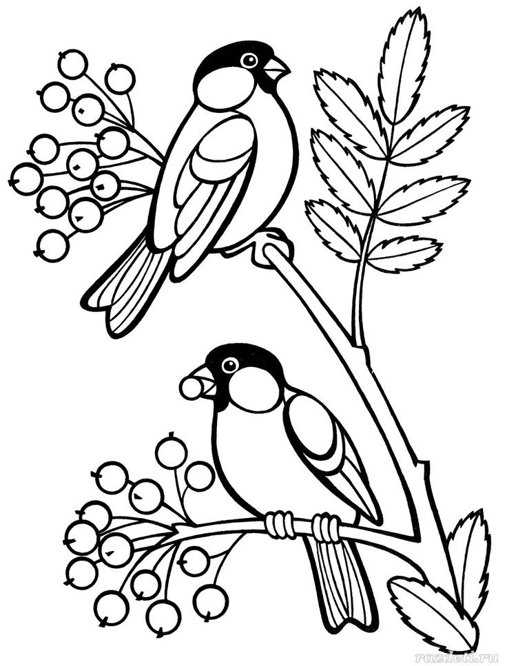 раскраски зимние птицы: 11 тыс изображений найдено в ...