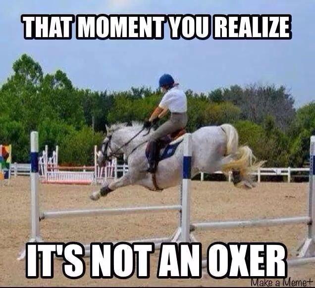 Horse jumping memes