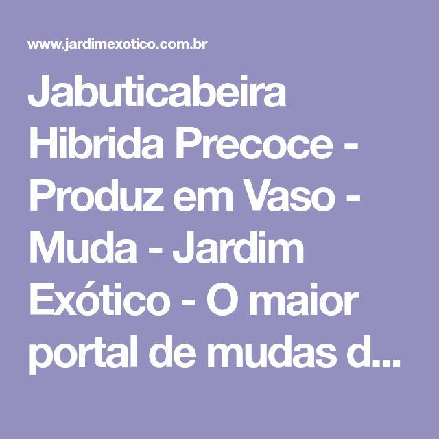 Jabuticabeira Hibrida Precoce - Produz em Vaso - Muda - Jardim Exótico - O maior portal de mudas do Brasil.
