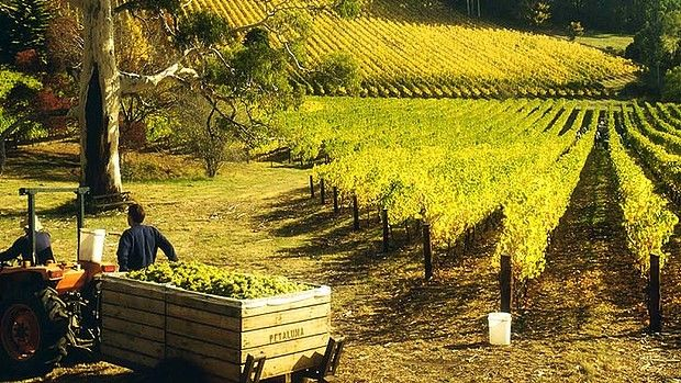 Savour a taste of Germany in the Adelaide Hills town of  of Hahndorf.