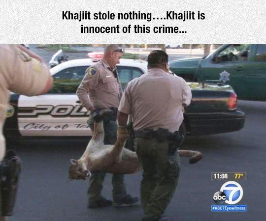 Khajiit Is Innocent   Skyrim funny, Skyrim, Funny games