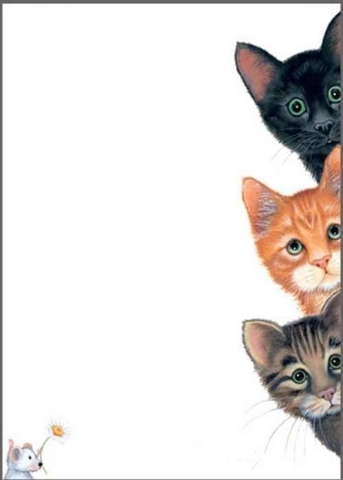 Des chats.