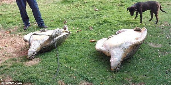 Il turista che salva 2 tartarughe dal mercato nero in Nicaragua (VIDEO) NAMASTE'