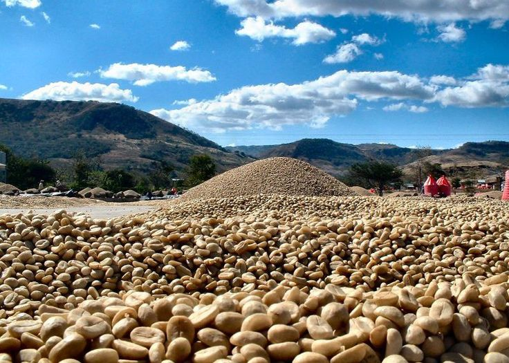 What Does 'Fair Trade' Coffee Really Mean? | Food Republic