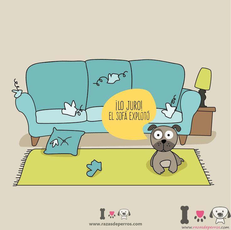 Perro ha destrozado el sofa