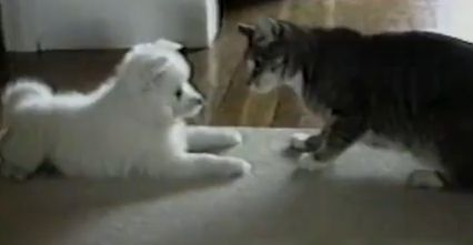 This is an amazing clip that starts off looking like a typical dog/cat interaction, but ends with something you'll have to see to believe and appreciate! Enjoy!