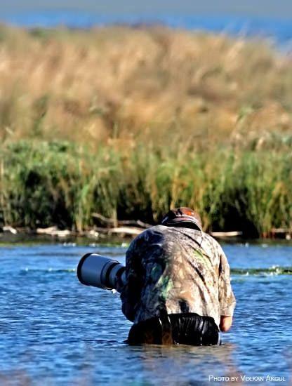 vahşi yaşam fotoğrafçılığı, vahşi yaşam, yaban hayat, manzara, doğa fotoğrafları, doğa fotoğrafçılığı, kuş fotoğrafçılığı, cesaret, doğru ışık