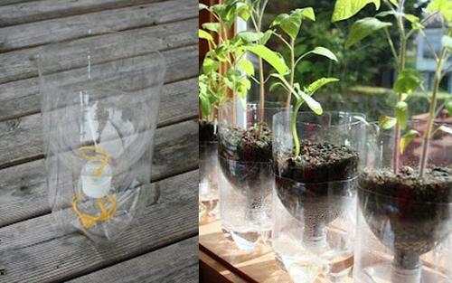 Botellas recicladas como macetas de auto-riego