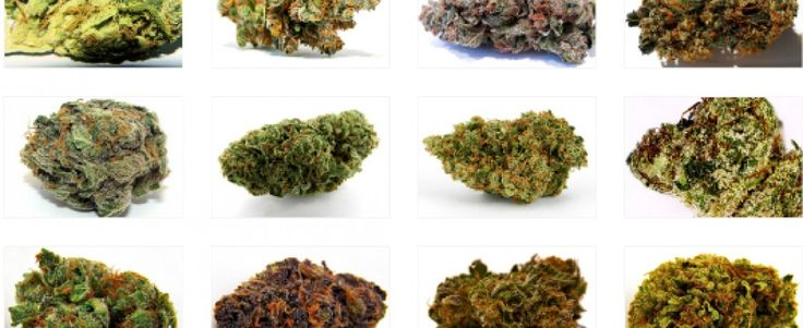Choosing The Most Effective Cannabis Strains for Treating Fibromyalgia Pain