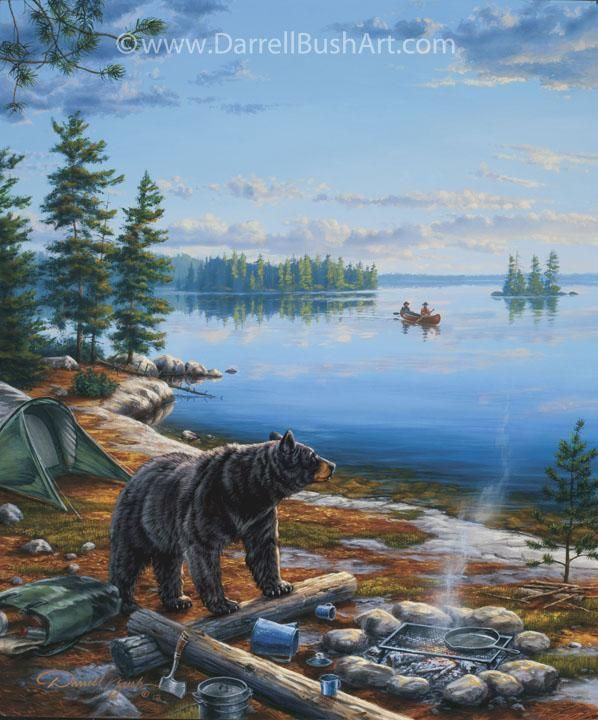 Curious Camper Darrell Bush