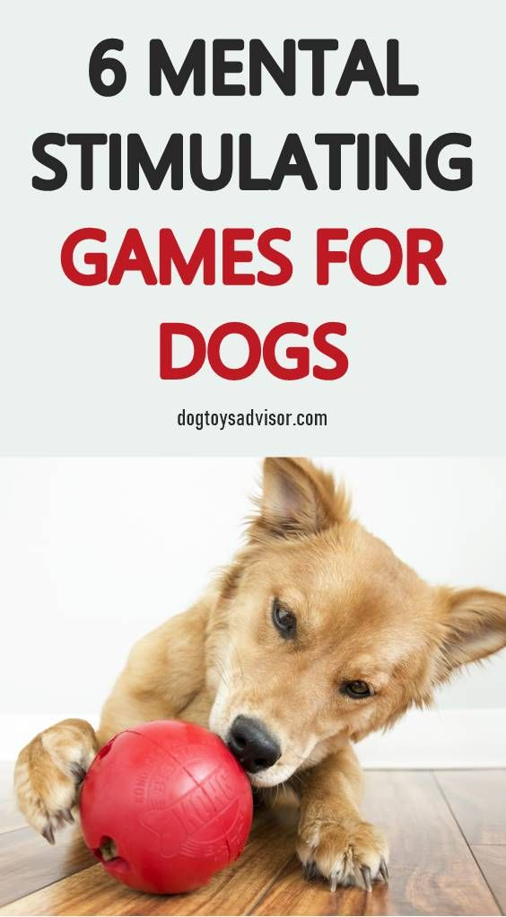 Looking For Some Ways To Keep Your Dog Busy Try Giving Thim More