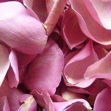 Click to Order Lilac Rose Petals