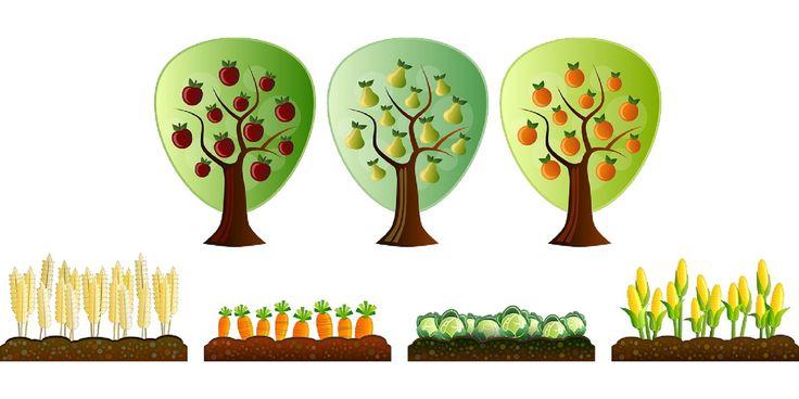 Jesień – drzewa owocowe